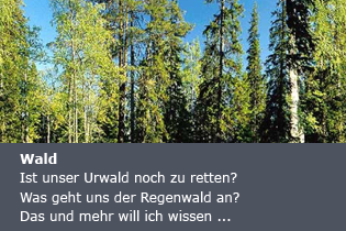thema-wald.png